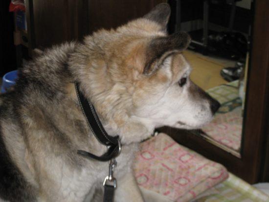 愛犬、高林リバー