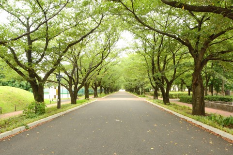 公園-Park